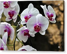 Orchids For Your Day Acrylic Print by Timothy Johnson