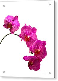 Acrylic Print featuring the photograph Orchids On White by Michael Waters