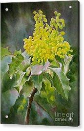 Oregon Grape Acrylic Print by Sharon Freeman