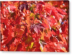 Acrylic Print featuring the photograph Oregon Red by Mindy Bench
