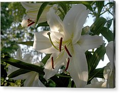 Acrylic Print featuring the photograph Oriental Lilies by Wanda Brandon