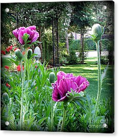 Acrylic Print featuring the photograph Oriental Poppies by Tanya  Searcy