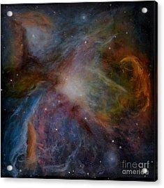 Orion Nebula Acrylic Print by Alizey Khan
