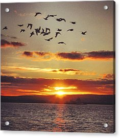 Orkkney's Sunset Acrylic Print