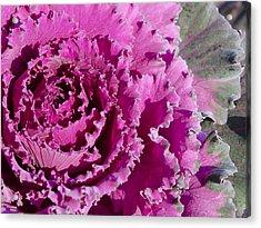 Ornamental Kale Acrylic Print by MaryJane Armstrong