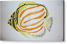 Ornate Butterfly Fish Acrylic Print by Tim Forrester