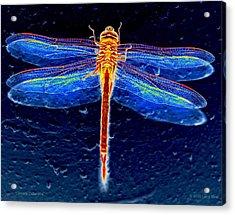 Ornate Odonata Acrylic Print