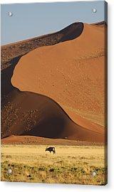 Oryx II Acrylic Print by Christian Heeb