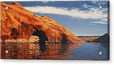 Osprey Hideaway Acrylic Print