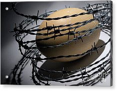Ostrich Egg Surrounded By Barbed Wire Acrylic Print by Sami Sarkis