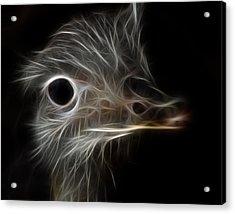 Ostrich Fractalius Acrylic Print