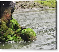 Acrylic Print featuring the photograph Otter In Bellingham Bay by Karen Molenaar Terrell