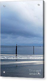 Acrylic Print featuring the photograph Out And About by Linda Mesibov