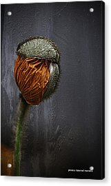 Out Of Darkness Grows Flowers Acrylic Print by Jessica Manelis