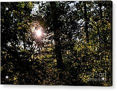 Out Of The Darkness He Calls Acrylic Print by Maria Urso