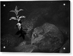 Out Of The Water Comes Shadows Bw Acrylic Print by Karol Livote