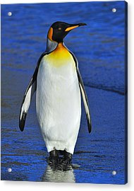 Out Of Water Acrylic Print by Tony Beck