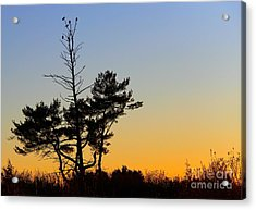 Acrylic Print featuring the photograph Out On A Limb by Davandra Cribbie