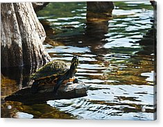 Out On A Limb Acrylic Print by Frank Feliciano