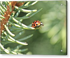 Acrylic Print featuring the photograph Out On A Limb by Penny Meyers