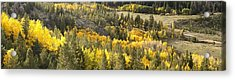 Outside Nederland Co Acrylic Print by Larry Darnell