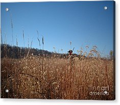 Acrylic Print featuring the photograph Outstanding In His Field by Mark McReynolds