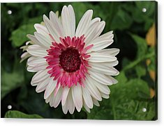 Acrylic Print featuring the photograph Over The Love Of You by Bob Whitt