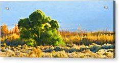 Owens Valley Tree And Brush Acrylic Print
