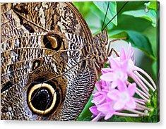 Owl Butterfly Acrylic Print by Daniel Osterkamp