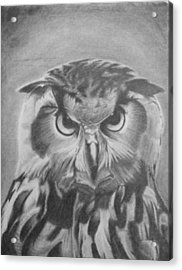 Owl Acrylic Print by Chris Finster
