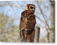 Owl In A Tree Acrylic Print by Paulette Thomas