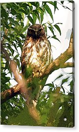 Acrylic Print featuring the digital art Owl In Contemplation by Pravine Chester