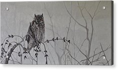 Owl In The Mist Acrylic Print by Tahirih Goffic