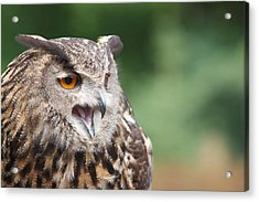 Acrylic Print featuring the photograph Owl by Josef Pittner