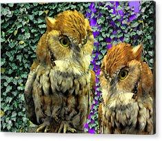 Owl Look Acrylic Print by Lynda Lehmann