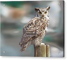 Owl Love Acrylic Print by Naman Imagery