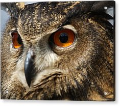 Owl Up Close Acrylic Print by Paulette Thomas