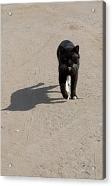 Owner Acrylic Print by Michael Goyberg