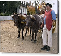 Oxen And Handler Acrylic Print by Sally Weigand