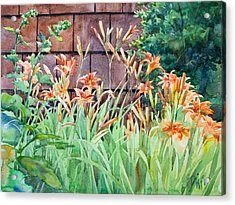 Oxenden Lilies Acrylic Print by Peter Sit