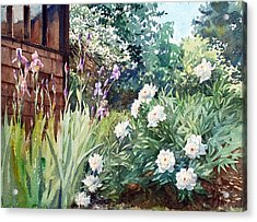 Oxenden Peonies Acrylic Print by Peter Sit