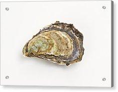 Pacific Oyster Acrylic Print by David Nunuk