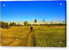 Acrylic Print featuring the photograph Paddy Field by Arik S Mintorogo