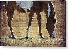 Paint Horse Acrylic Print by Betty LaRue