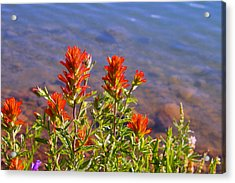 Paintbrush At Water's Edge Acrylic Print