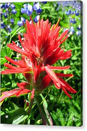 Paintbrush Acrylic Print by Kathy Bassett
