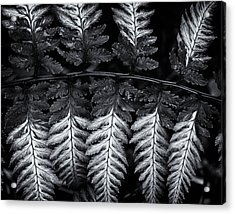 Painted Fern Acrylic Print
