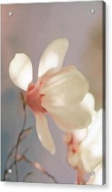 Painted Flower Acrylic Print
