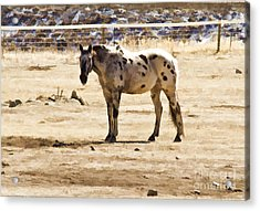 Painted Horses II Acrylic Print by Angelique Olin