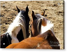 Painted Horses IIi Acrylic Print by Angelique Olin